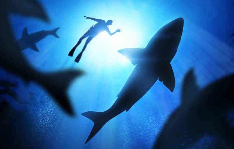 scuba diver survived in the shark-filled water