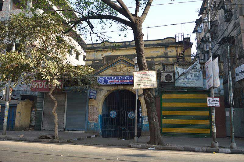 C.S.P.C.A Animal Hospital - Bow Bazar Street, Kolkata